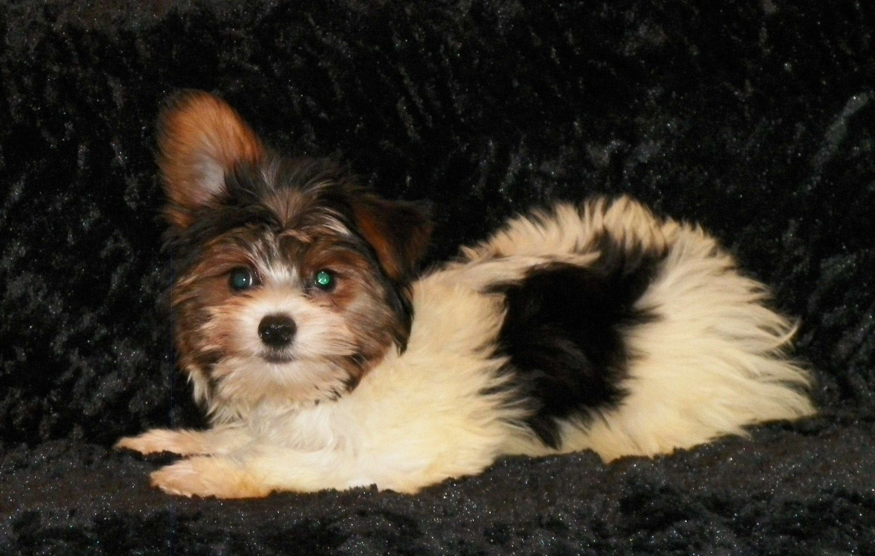 Stonebriar ranch puppies image nvjuhfo Image collections