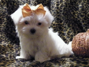Cash, Male, Maltese